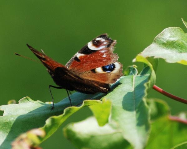 butterfly by Mizcah