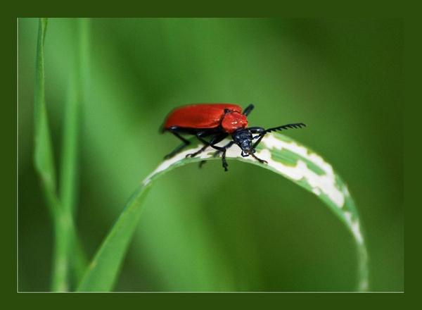 Bug by dnwilliams