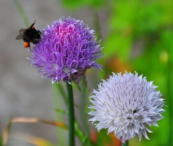 Busy Bee by billmac57