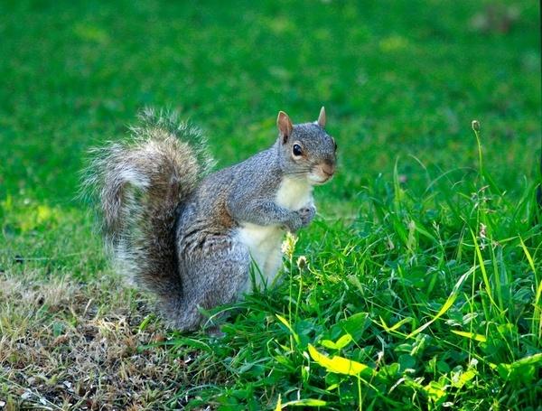 My Secret Squirrel by Luke_Skywalker