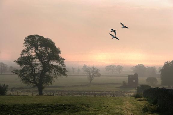 Bankend  birds by aliciabeesley