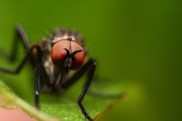 fly by macro-junkie