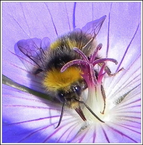 Bee-Behaviour II. by rpba18205