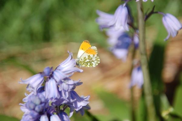 Butterfly by JoanMcC