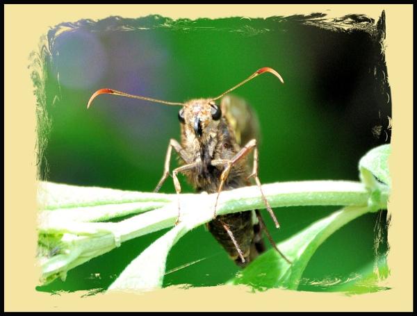 Mr Antenna by sherrbearsphotos