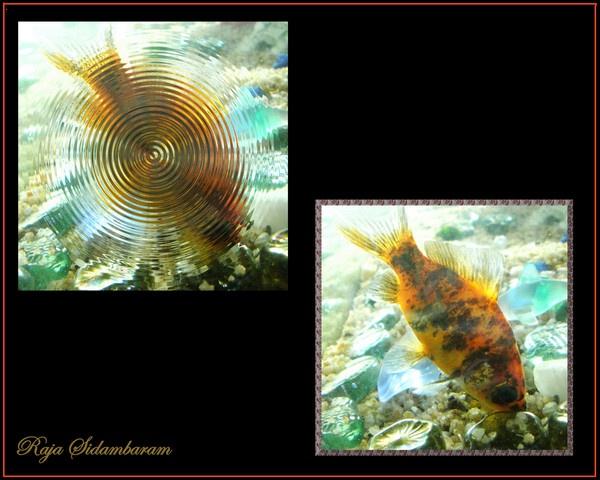 Gold under Whirlpool by RajaSidambaram