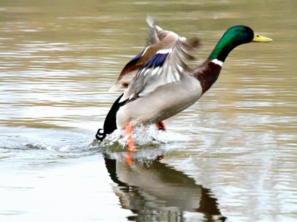 water dancing by gingerbenno