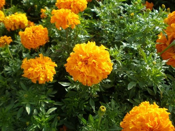 sunny flower by Virna