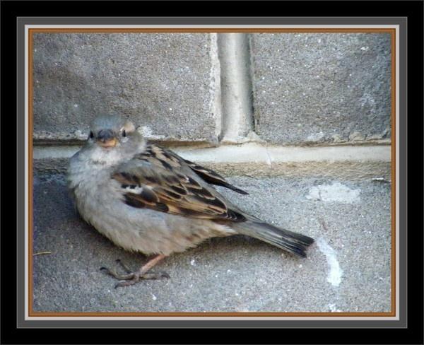 bird on wall by Gid