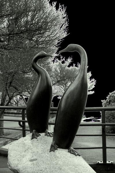 Birds in Black by Dizize
