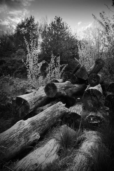 logs by johnflindt