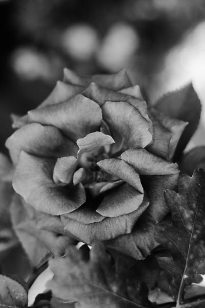 mono flower by johnflindt