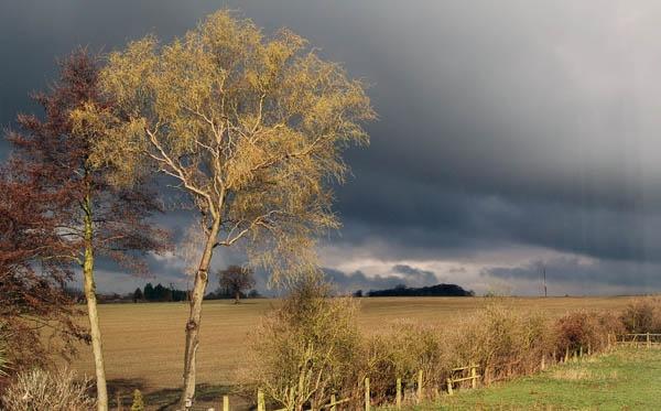 Storm Tree by David_Turnbull