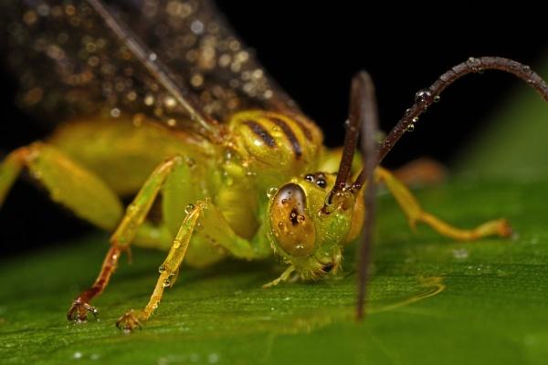 Wasp? by zanzibarwinds