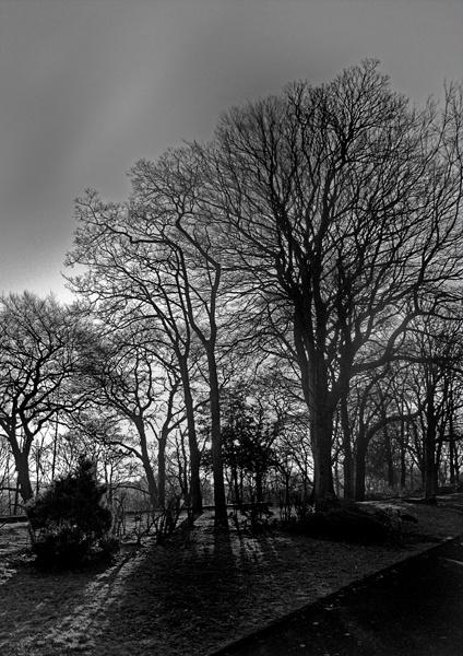 trees by stefan