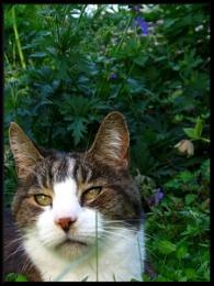 Aih sitz in ur garden, squishin ur clover