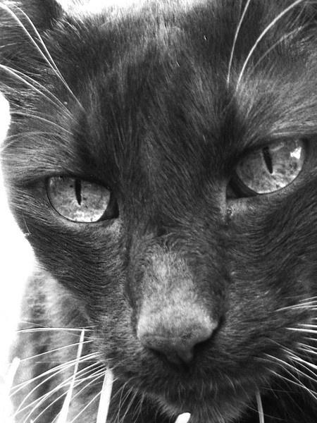 Feline James Dean by pattycake