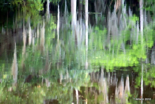 Withlacoochee River Reflections by Tina_Michelle