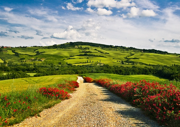 Road into the Tuscan Hills by DavePrince