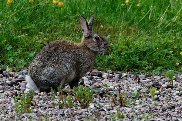 Bunny by AlistairJ