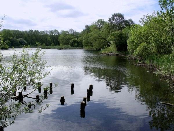 Joe\'s Pond by thebleezer