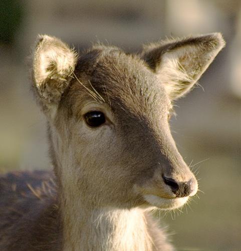 deer by epoxy