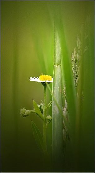 Deep in the Grasses by taggart