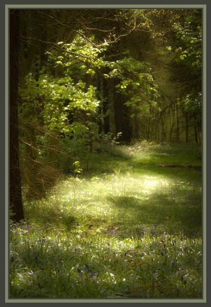 Sunlit glade by Nettles