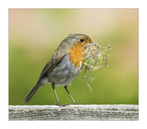 Building a nest by WildLight