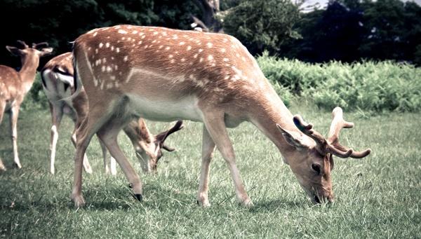Deer oh Deer oh Deer by TonyKerrey