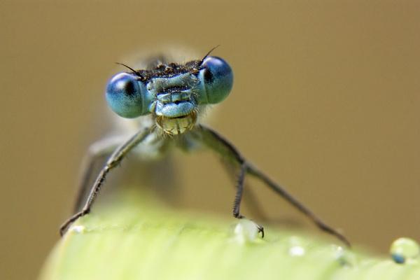 Big blue eyes by Angi_Wallace