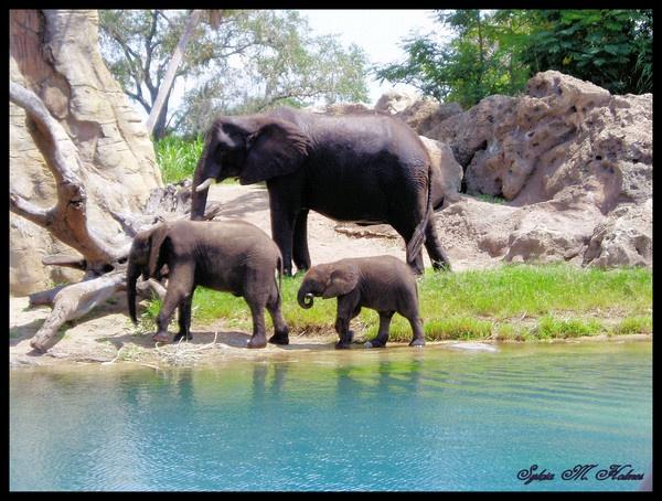 A Trio of Elephants by Ladynina