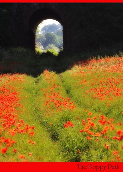 The Poppy Path by maroondah