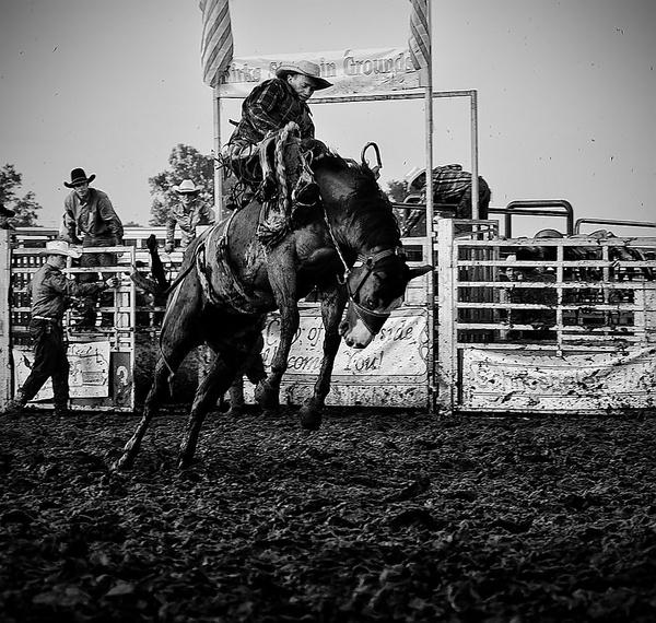 Bronco by aneta