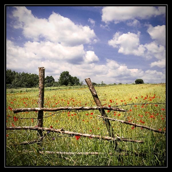 Fence by Kot