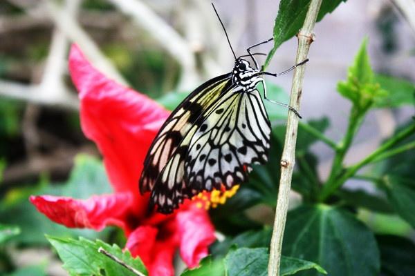 Butterfly by Radders3107
