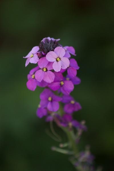 Purple Flower by DarrenSmith