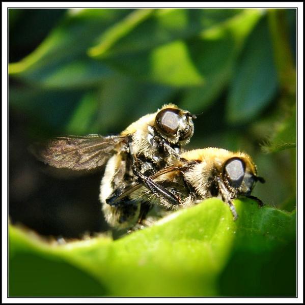 Bee- Behaviour III.(or no birds). by rpba18205