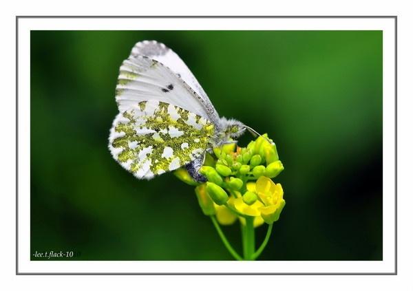 white by photoflacky