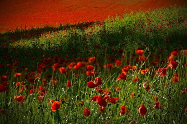 SIMPLY RED by Palmerjoss