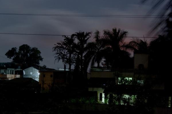 Night Shot of Palm Trees by devlin