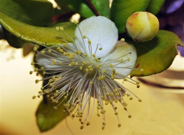 macro flower by HarrietH