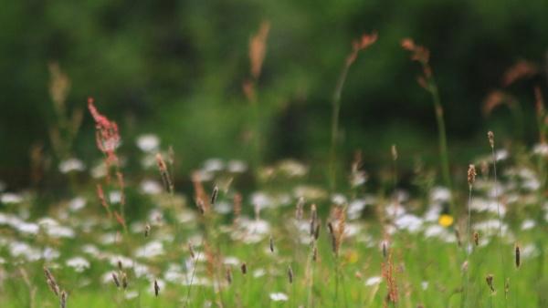 summer grasses by johnflindt