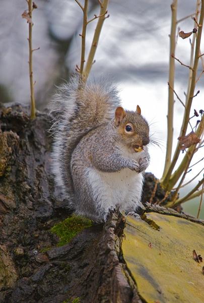 Squirrel by Mandi