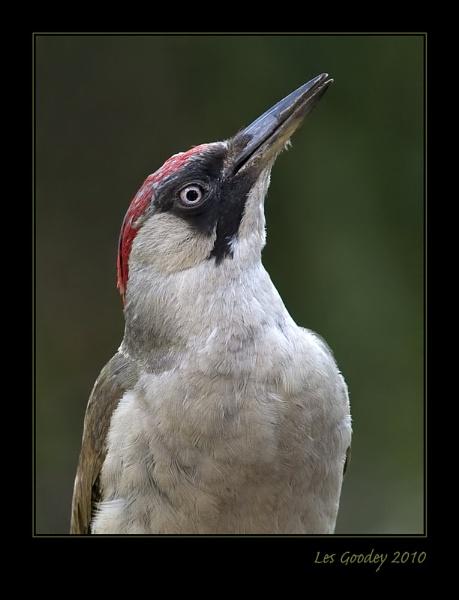 Green Woodpecker by lesgoodey