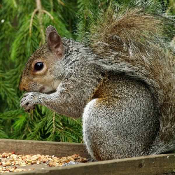 Tree Rat by kenp