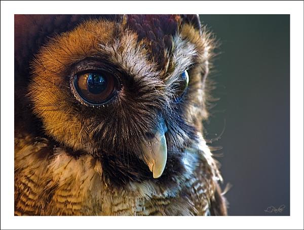 Owl by skye1