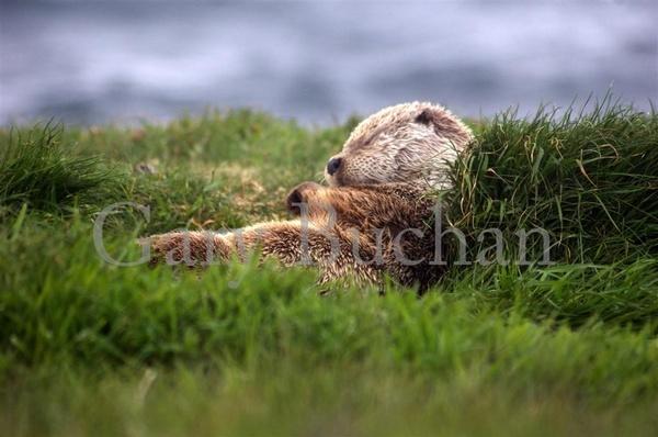 Sleepy Time by gazb159