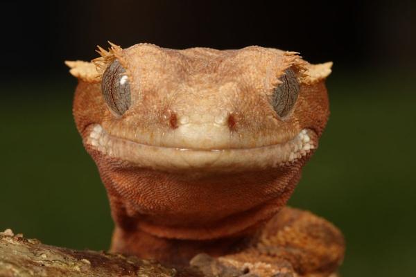 gecko by macro-junkie