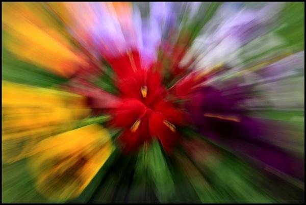 Distorted Pansies by In-Focus-Imaging
